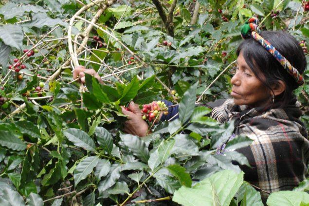 Rio-Azul-coffee-cooperative-Guatemala-4